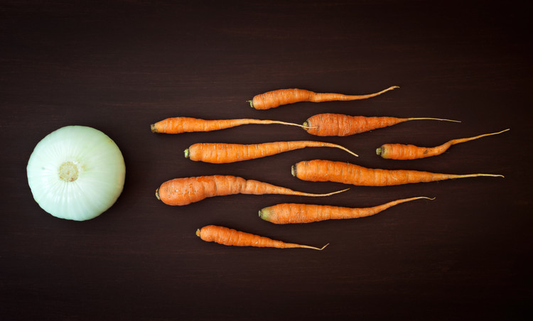Art Photography Vegetable reproduction