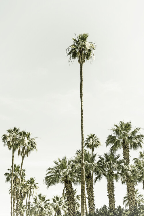 Art Photography Vintage palm tree  paradise