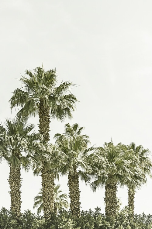 Art Photography Vintage palm trees at the beach