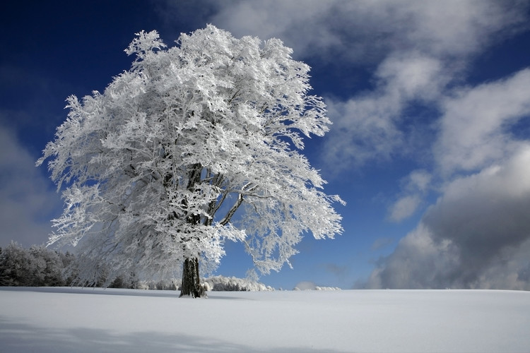 Art Photography White Windbuche in Black Forest