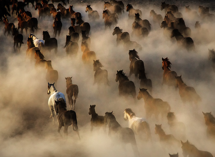 Art Photography Wild Horses