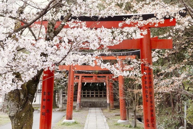 Taide valokuvaus Yoshida Shrine Torii