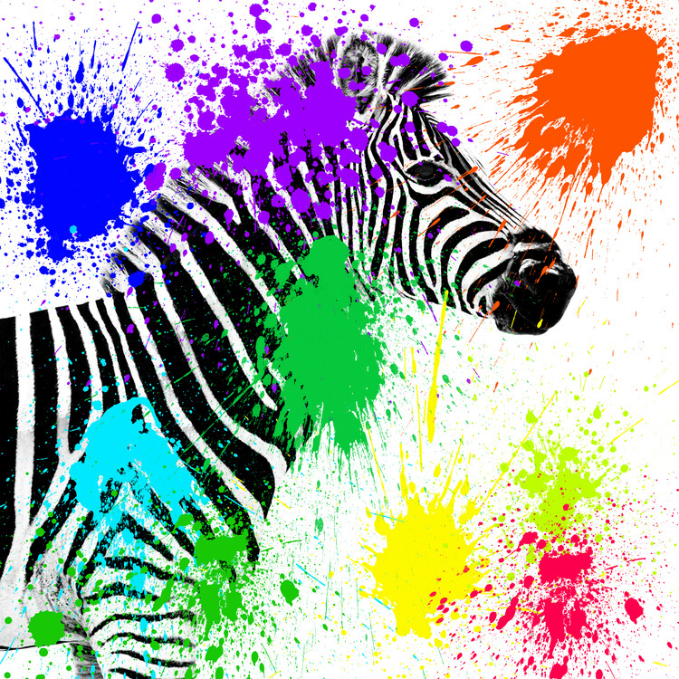 Art Photography Zebra Profile