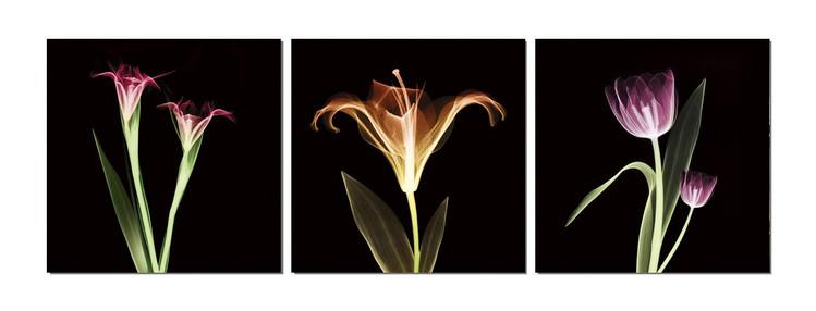Arte moderna Flowers - X-Ray