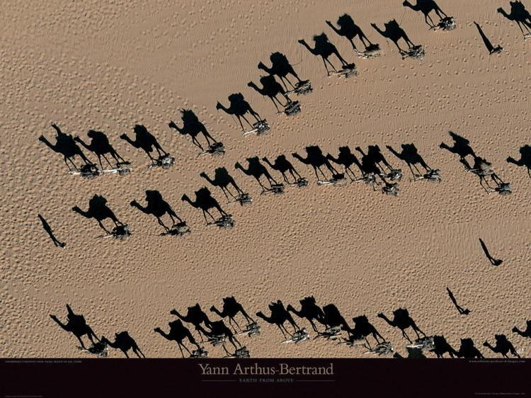 Impressão artística Caravanes de dromadaires - Niger