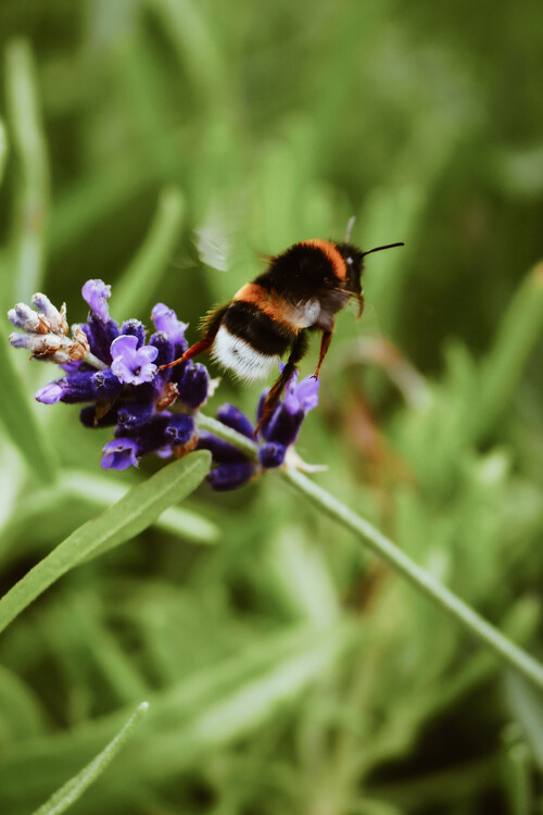 Arte Fotográfica Exclusiva Bee buzzing