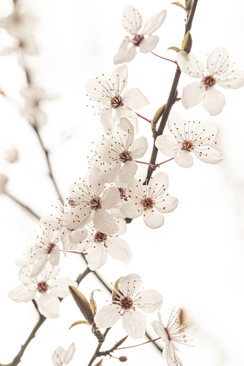 Arte Fotográfica Exclusiva Blossoming