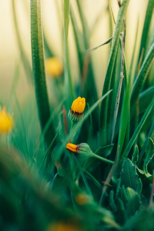 Arte Fotográfica Exclusiva Green-flowers-and-plants-from-nature