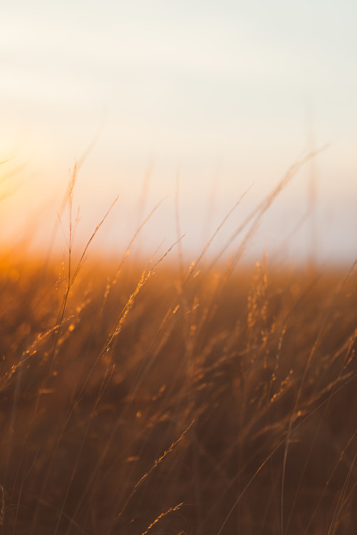 Arte Fotográfica Exclusiva Last sunrays over the dry plants