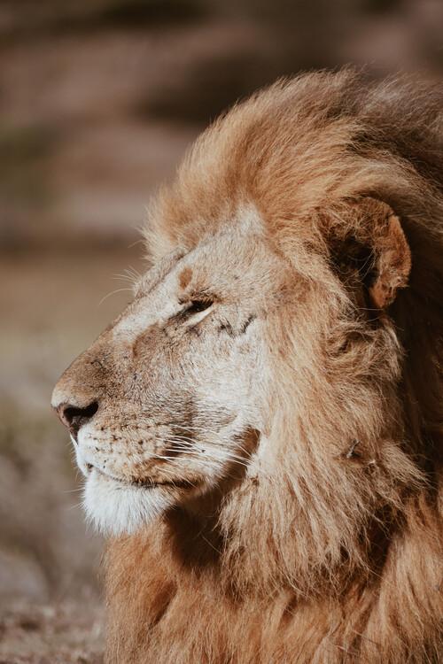 Arte Fotográfica Exclusiva Lion King