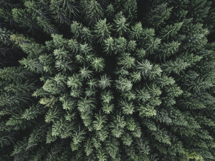 Arte Fotográfica Exclusiva Moody forest from above