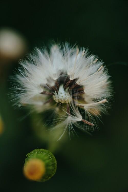 Arte Fotográfica Exclusiva Dandelion inside the forest
