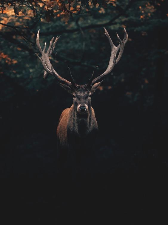 Arte Fotográfica Exclusiva Deer1