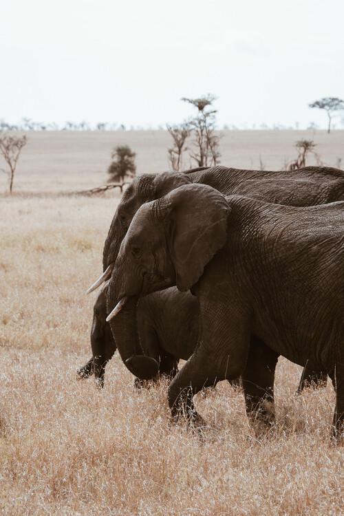 Arte Fotográfica Exclusiva Elephant Family