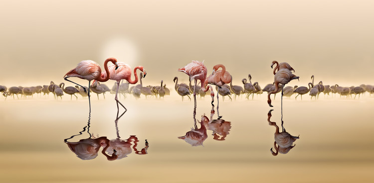 Arte Fotográfica Exclusiva Flamingos Ii