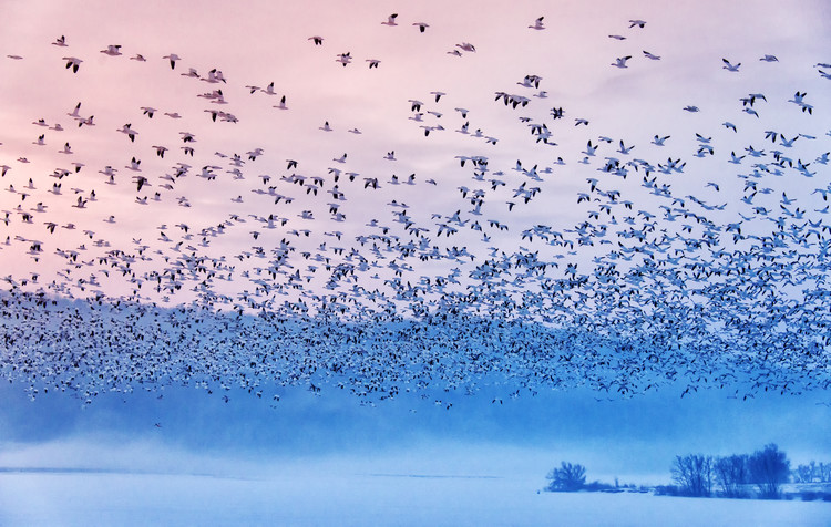 Arte Fotográfica Exclusiva Flying In the Fogging Morning