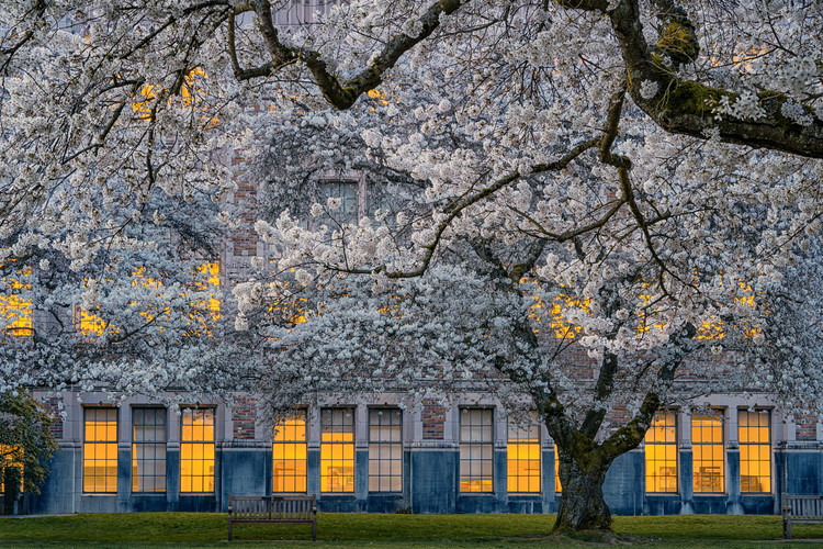 Arte Fotográfica Exclusiva Morning at University of Washington
