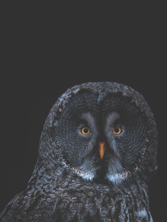 Arte Fotográfica Exclusiva owl1