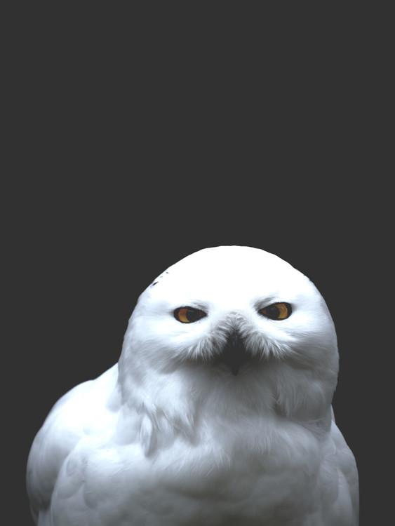 Arte Fotográfica Exclusiva owl2