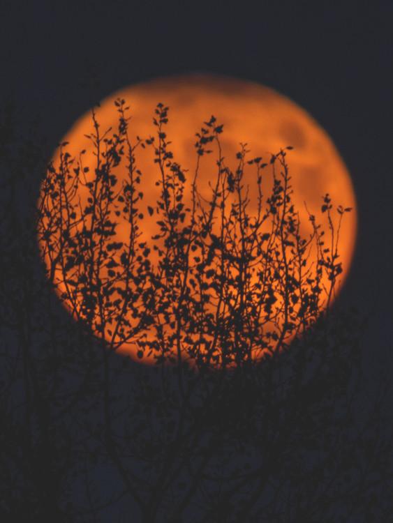 Arte Fotográfica Exclusiva sunposter1