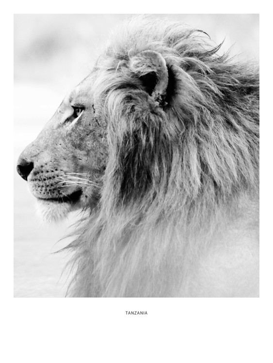 Arte Fotográfica Exclusiva tanzania4