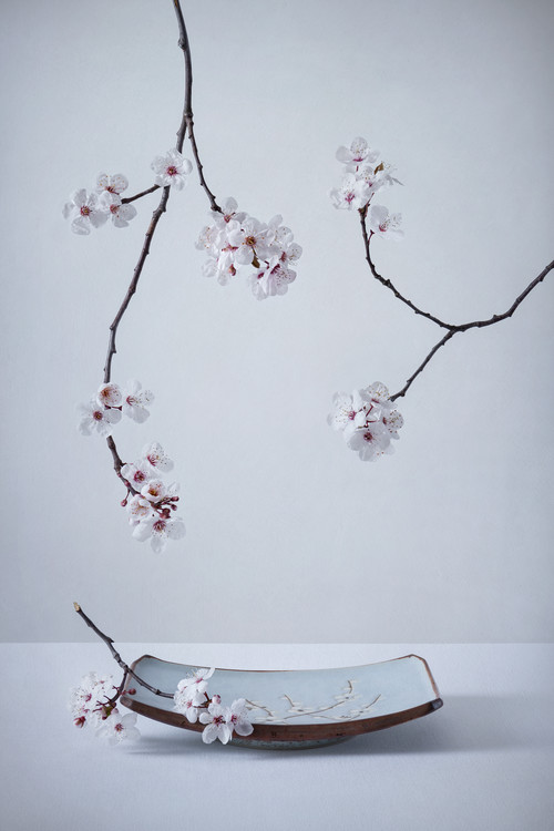 Arte Fotográfica Exclusiva The First Cherry Blossom
