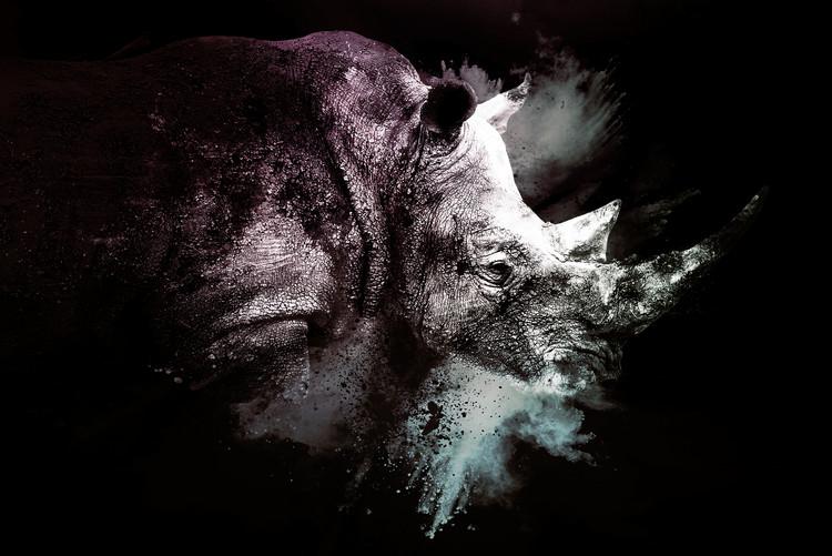 Arte Fotográfica Exclusiva The Rhino