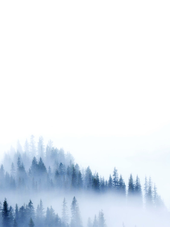 Arte Fotográfica Exclusiva treeblue2