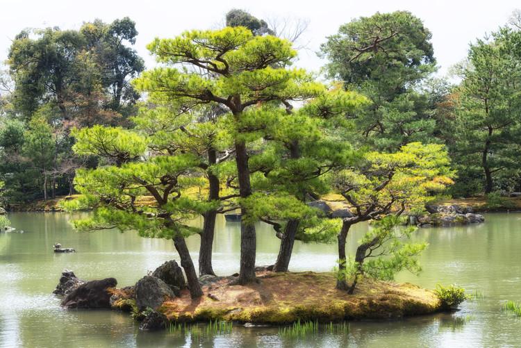 Arte Fotográfica Exclusiva Vegetal Island