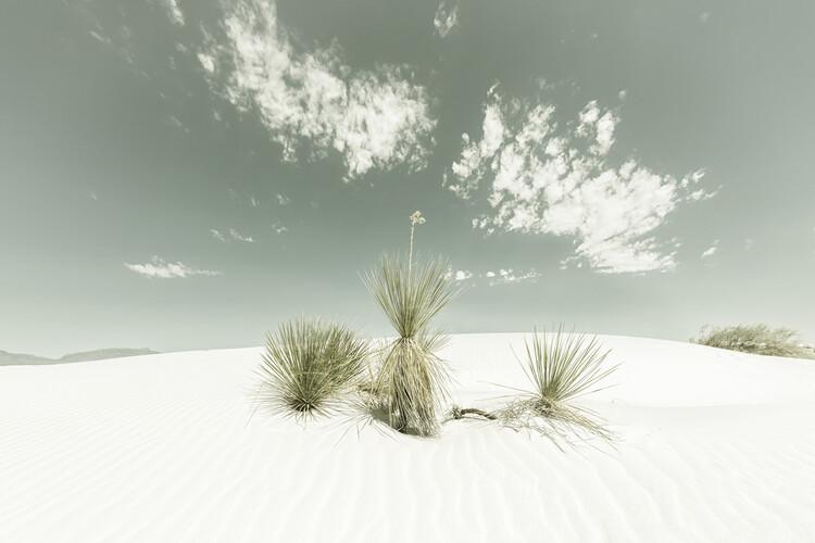 Arte Fotográfica Exclusiva White Sands Vintage