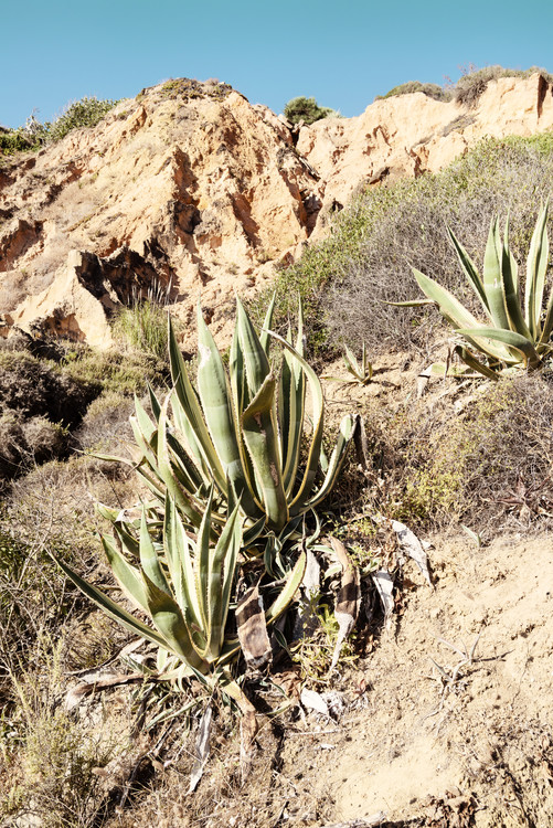 Arte Fotográfica Exclusiva Wild Agaves