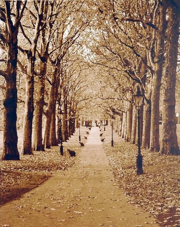 Autumn Stroll II Reproduction d'art