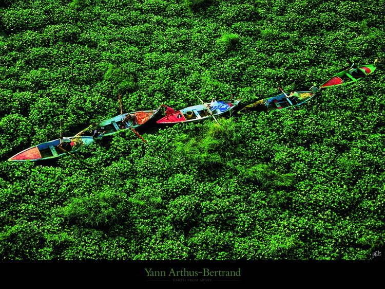 Barques prises dans les jacinthes d'eau sur le Nil Reproduction d'art