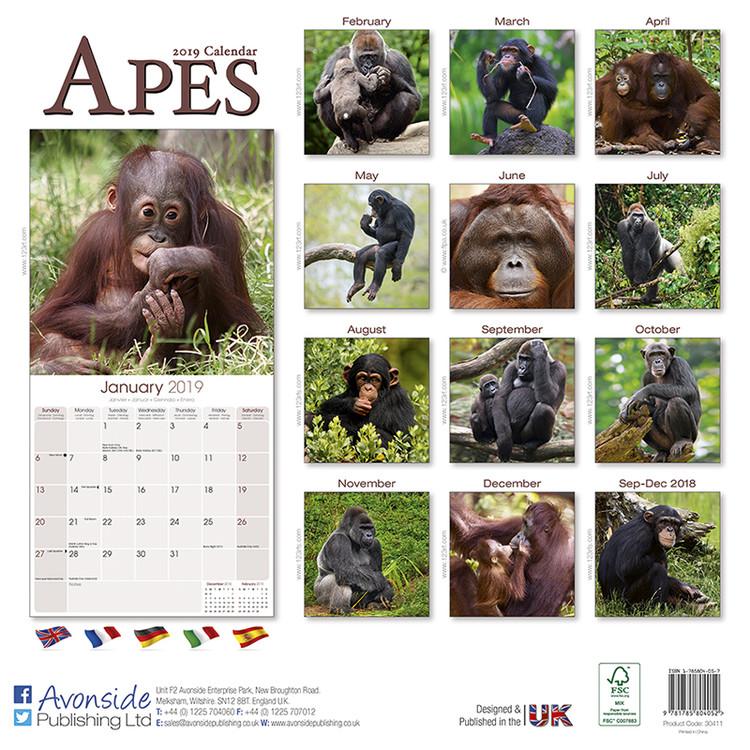 Calendar 2020  Apes