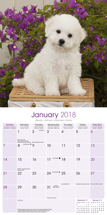 Calendar 2018  Bichon Frise