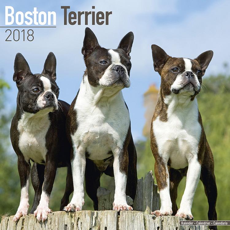 Calendar 2018  Boston Terrier