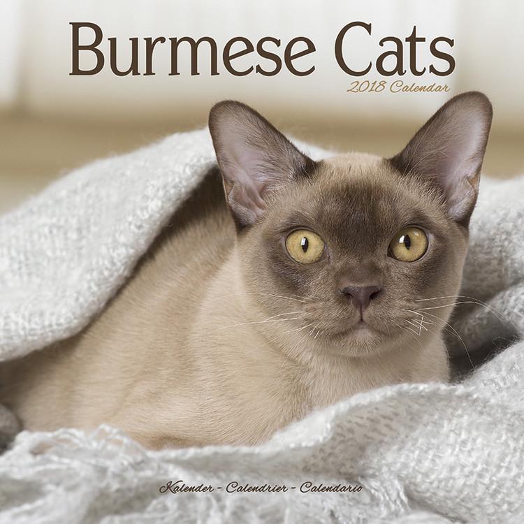 Calendar 2019  Cats - Burmese