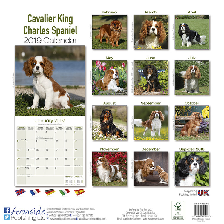 3a2322524a9 Cavalier King Charles - Calendars 2019 on UKposters EuroPosters