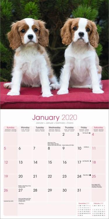 Calendar 2021 Cavalier King Charles