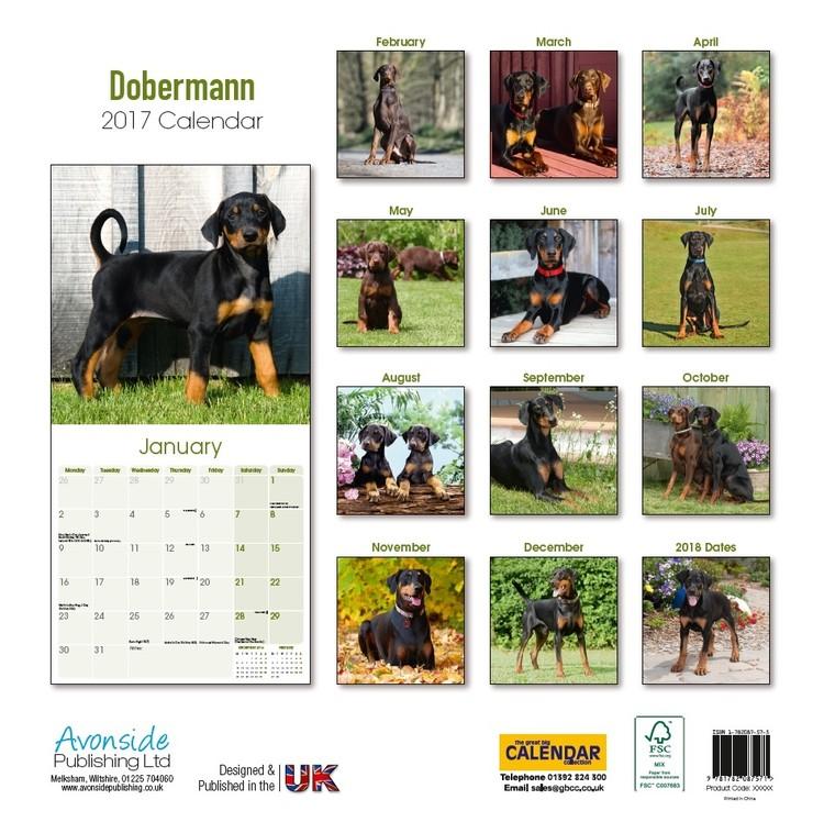 Calendar 2017 Dobermann