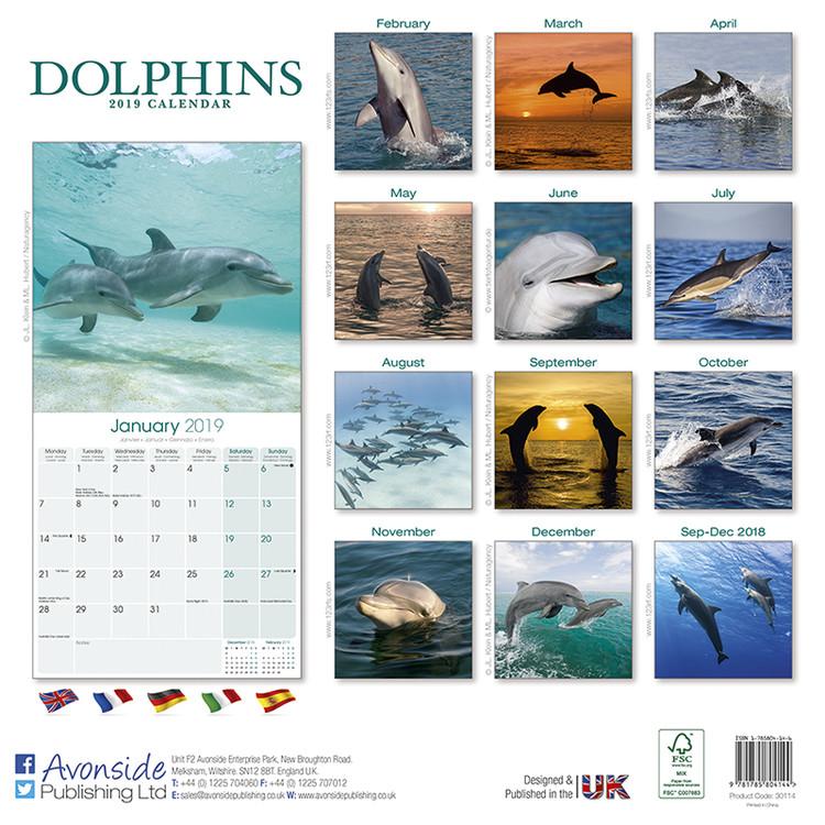 Calendar 2020  Dolphins