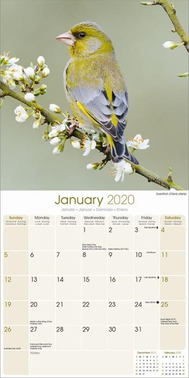 Calendar 2021 Garden Birds