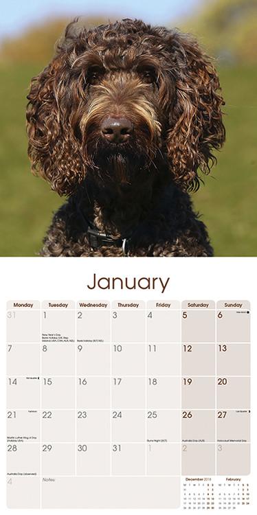 Calendar 2019  Labradoodle