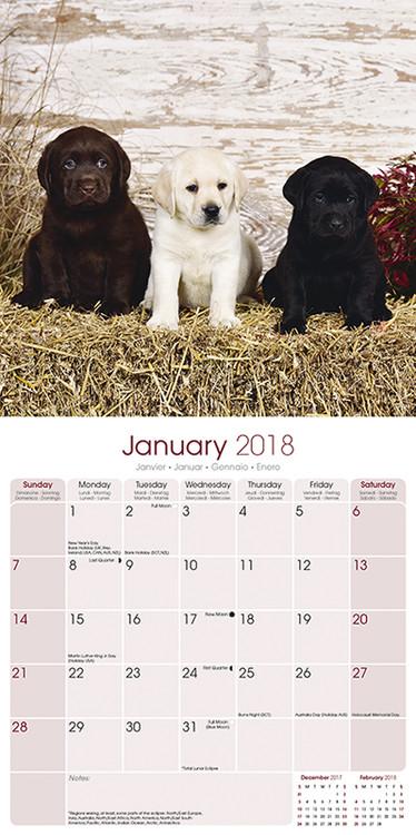 Calendar 2019  Labrador Ret (Mixed)