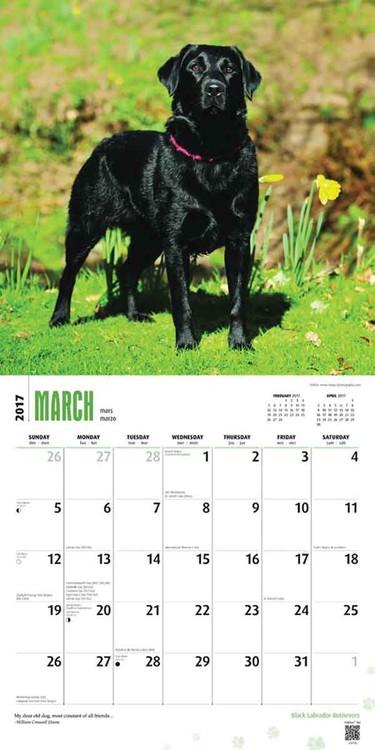 Calendar 2021 Labrador Retriever - Black