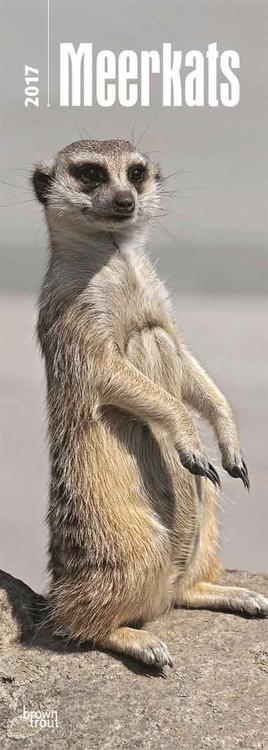 Calendar 2021 Meerkats