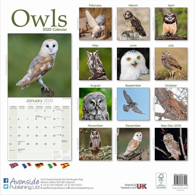 Calendar 2020 Owls