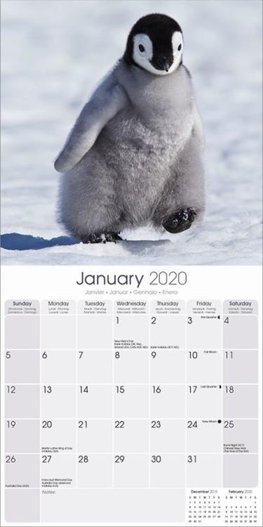 Calendar 2020 Penguins