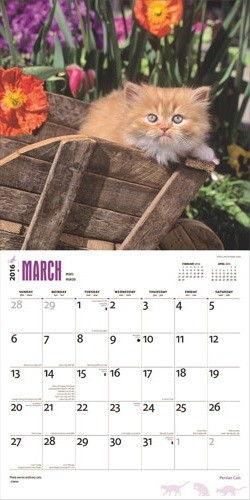 Calendar 2020  Persian Cats