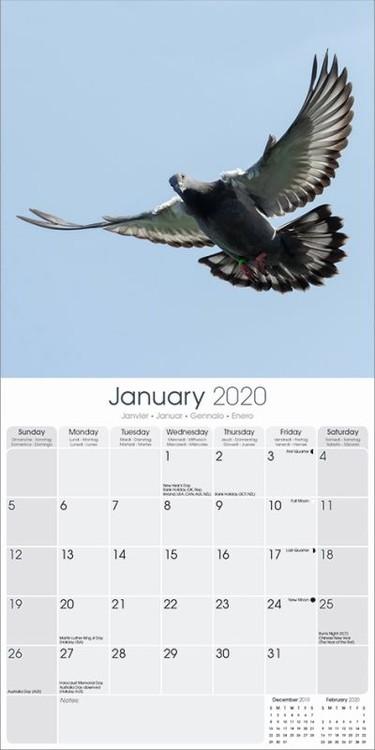 Calendar 2020  Pigeons